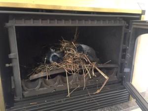 verwijderen van vogelnesten